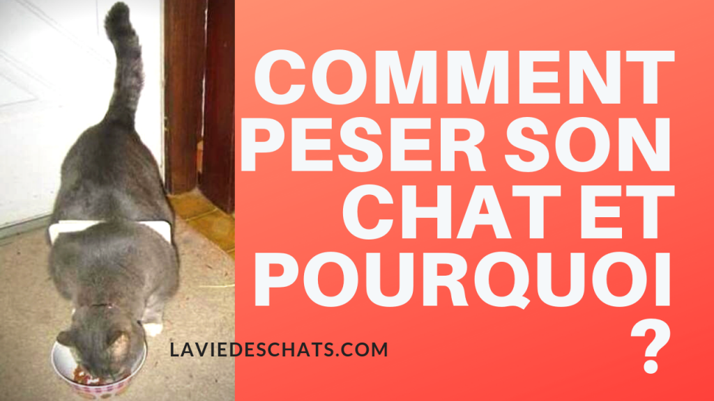 comment peser son chat
