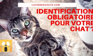 identification obligatoire de votre chat