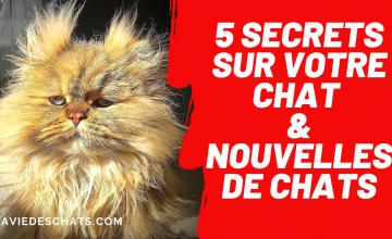 secrets de votre chat
