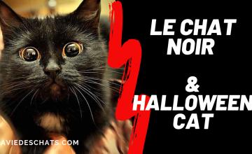 chat noir halloween cat