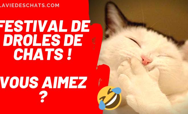 Chats Droles La Vie Des Chats