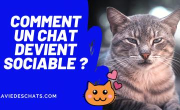 pour qu'un chat devienne sociable