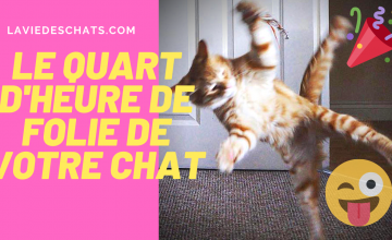 chat court pour son quart dheure de folie