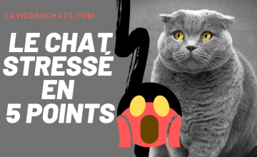 le chat stressé en 5 points