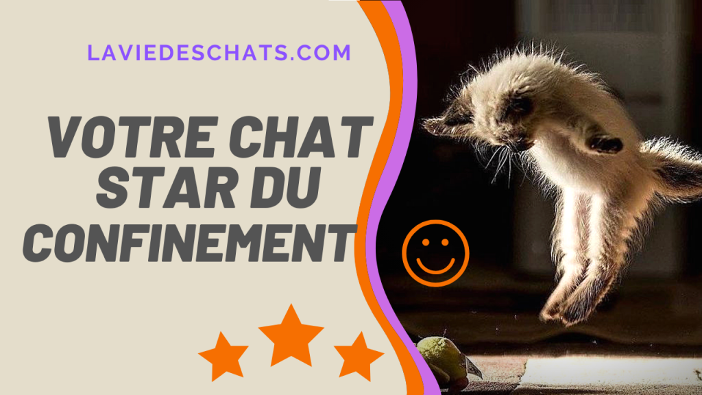 votre chat star du confinement