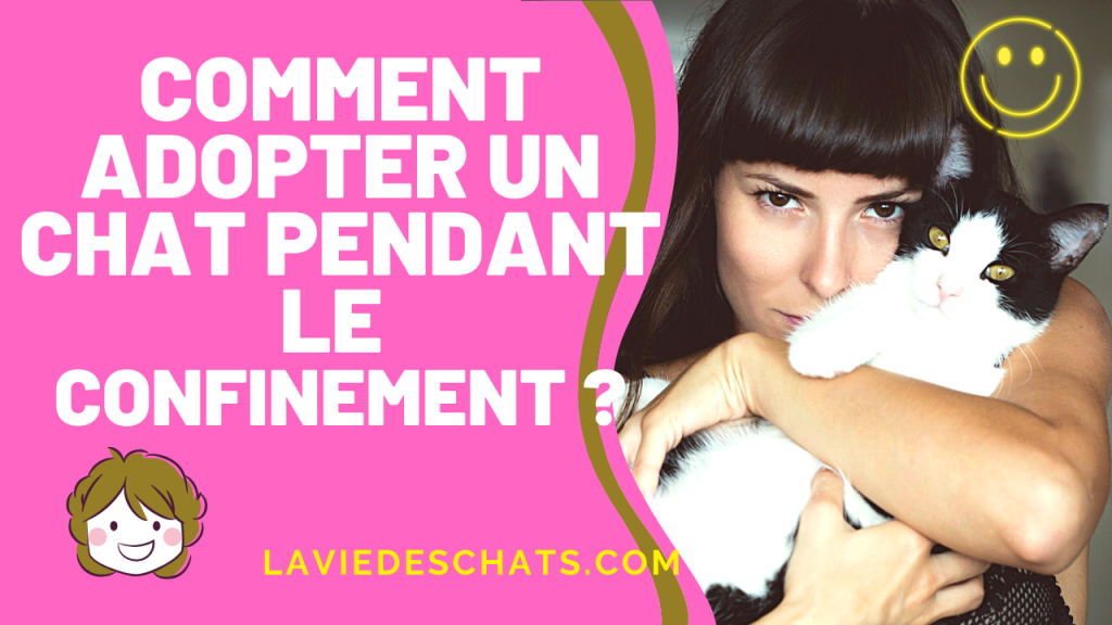 comment adopter un chat pendant le confinement