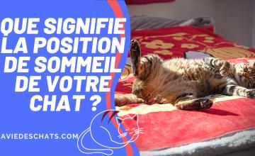 position quand votre chat dort
