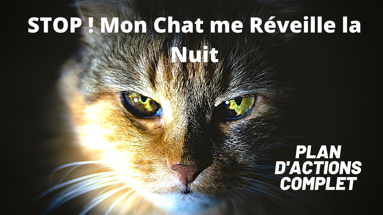 STOP Mon Chat me Réveille la Nuit