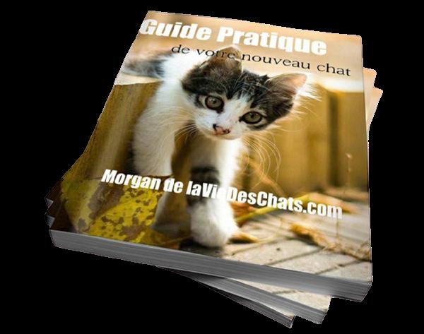 Guide d'accueil d'un nouveau chat