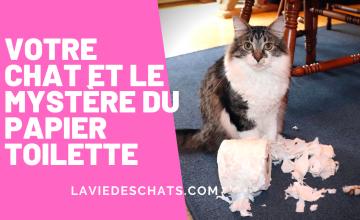 votre chat et le papier toilette
