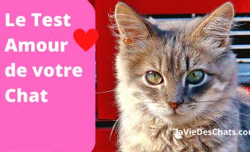 Test amour de chat