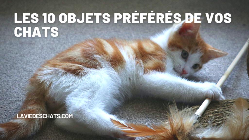 Les 10 objets préférés de vos chats