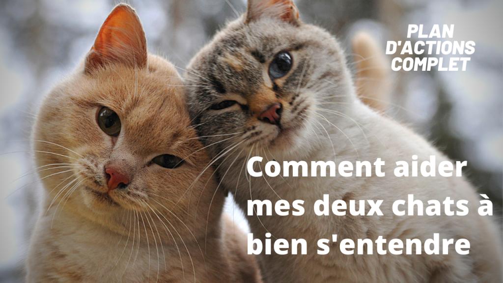 Formation Comment aider deux chats à bien s'entendre