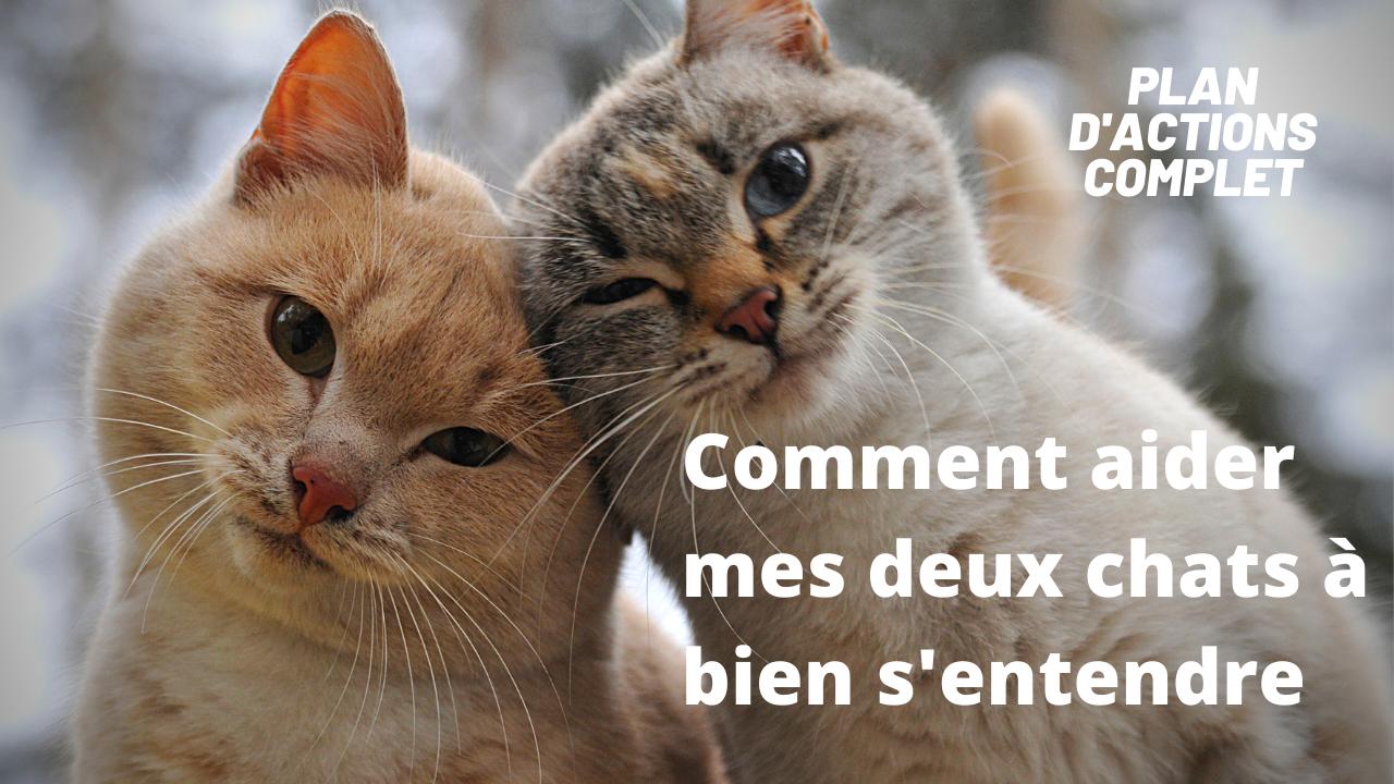 Comment aider deux chats à bien s'entendre