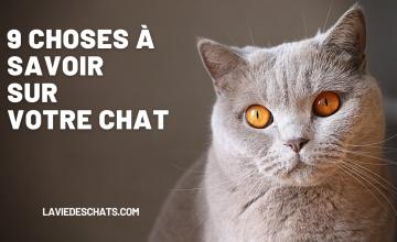 tout savoir sur votre chat