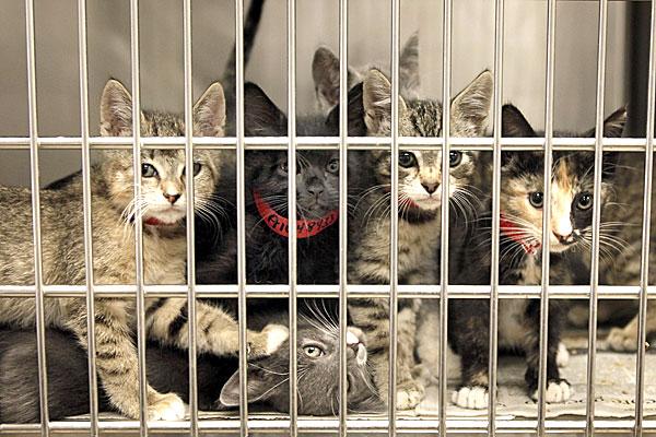chatons dans un refuge