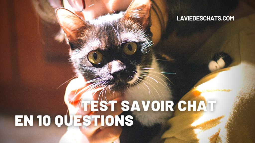 Test Savoir Chat