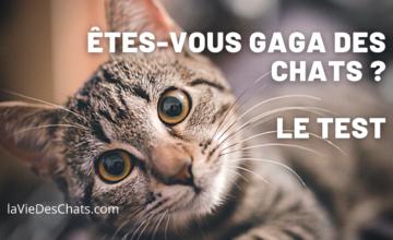 Test Gaga des chats