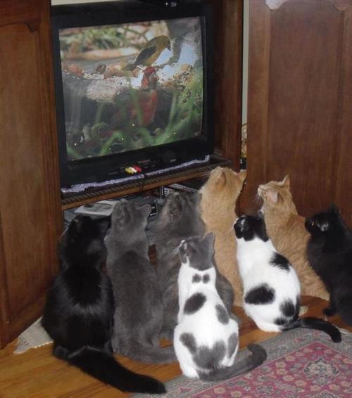 chats devant un oiseau a la tele
