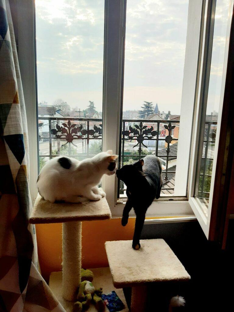 chez sophie ses deux chats vivent le bonheur