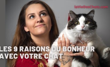 Les 9 raisons du bonheur avec votre chat