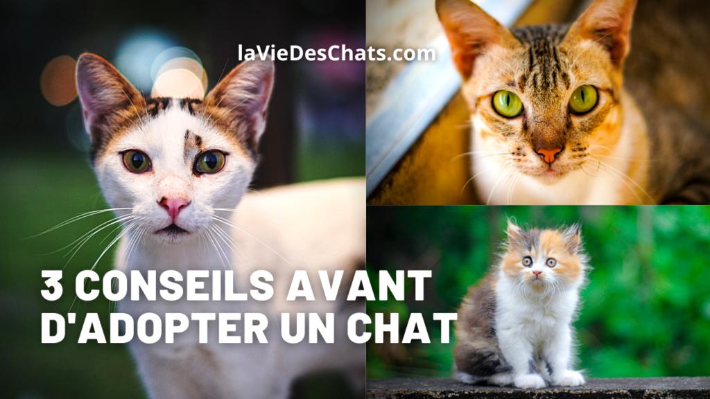 3 conseils pour adopter un chat