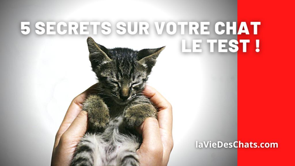 5 secrets sur votre chat