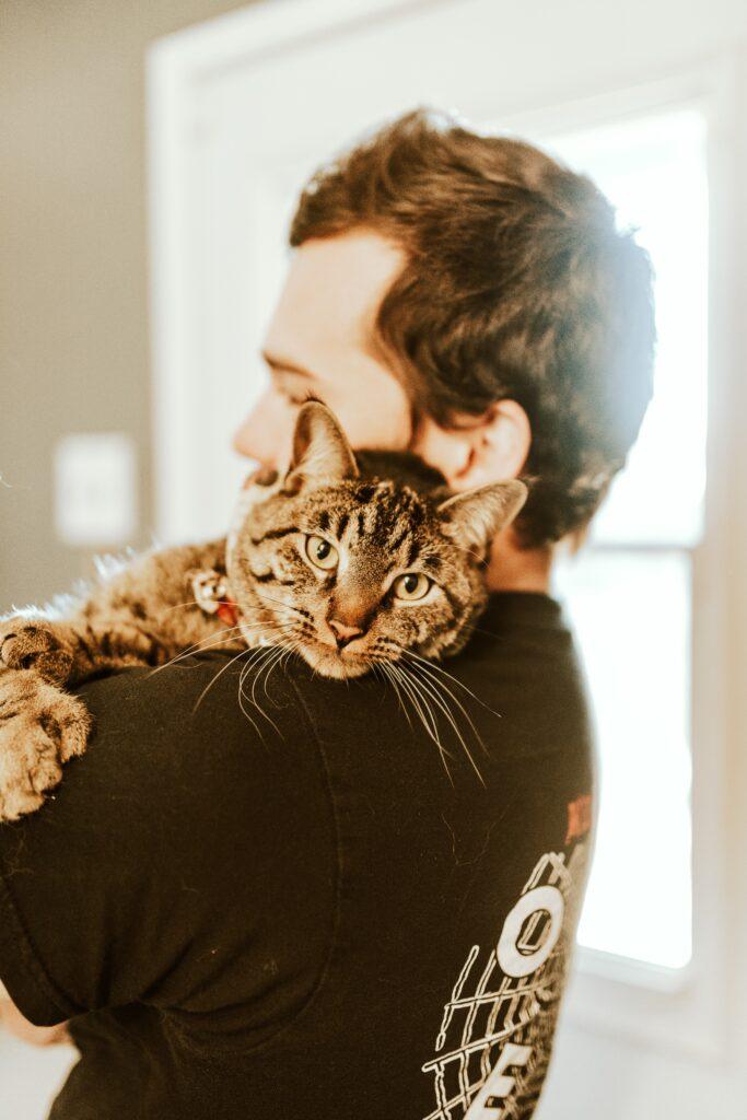 beau chat tigré sur l'épaule de papa chat