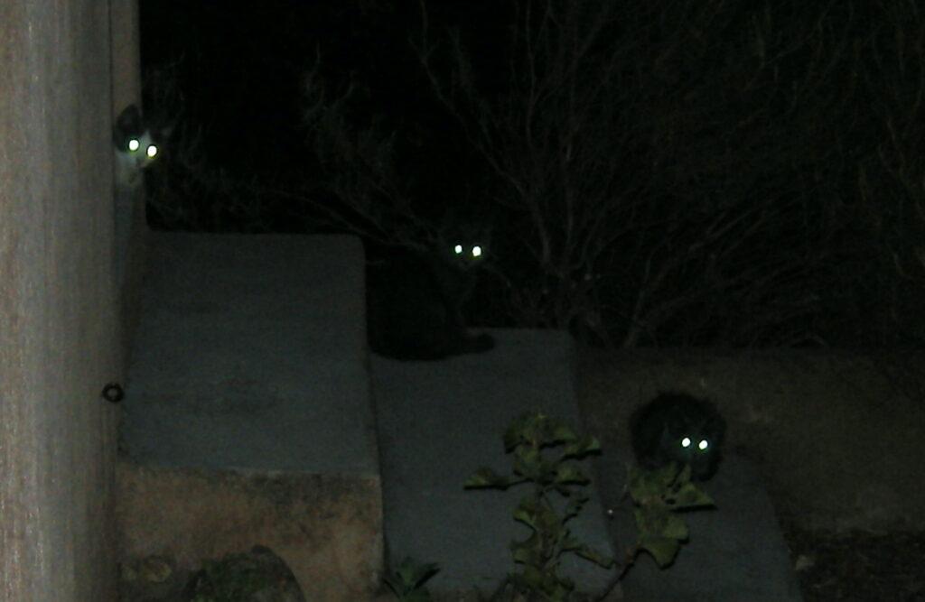 yeux de chats dans le noir
