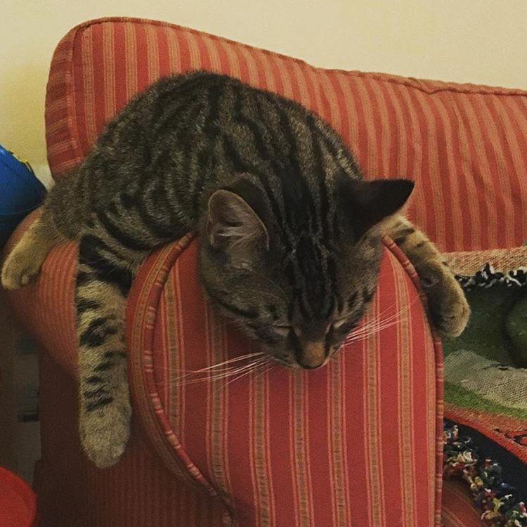 chat dort avachi sur accoudoir canapé