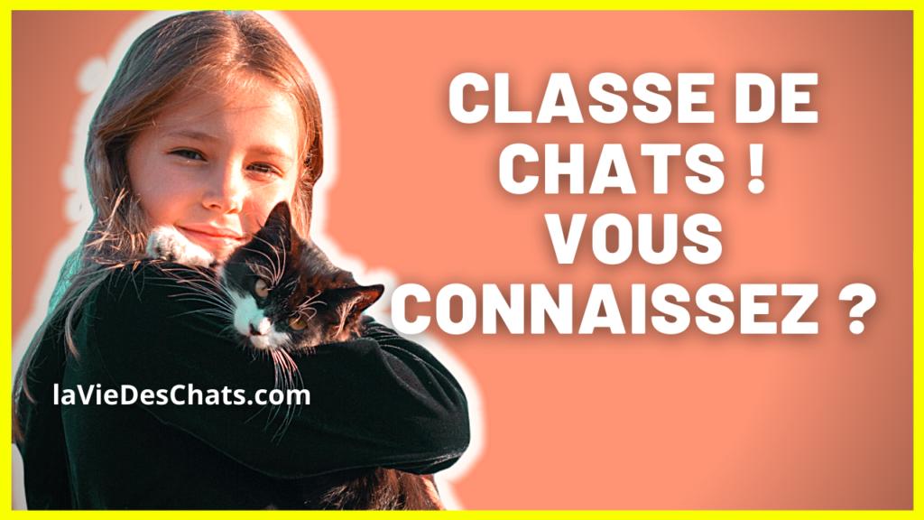 classe de chats