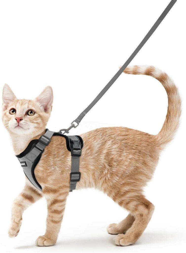 harnais pour chat
