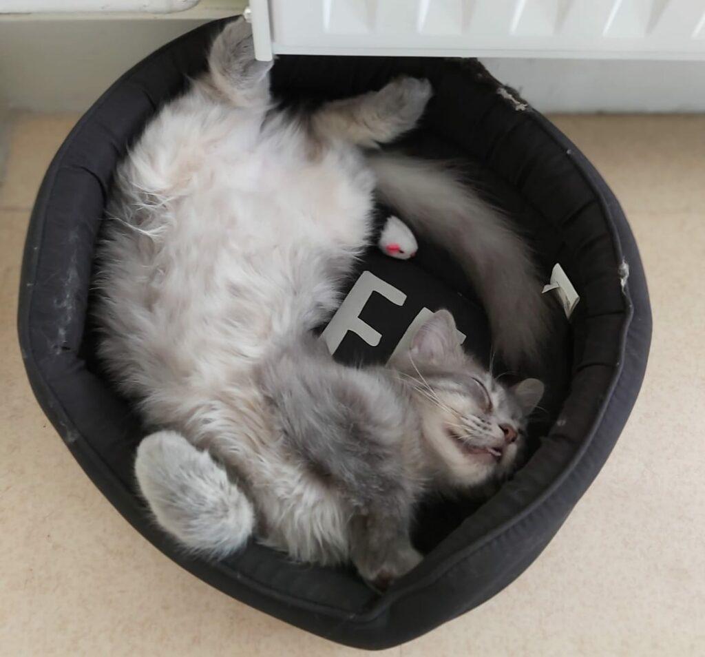 ce chat dort tout le temps