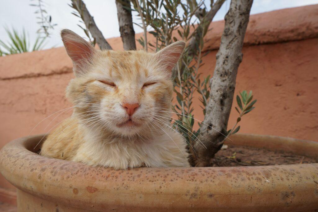 dire non à votre chat dans le bac à fleurs