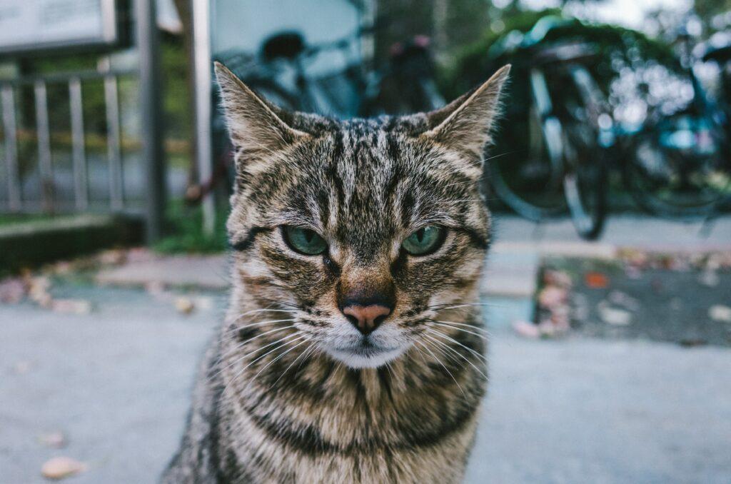 dire stop à son chat qui reste impassible
