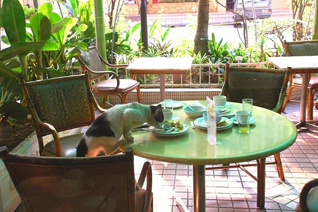 dire stop à son chat qui monte sur la table
