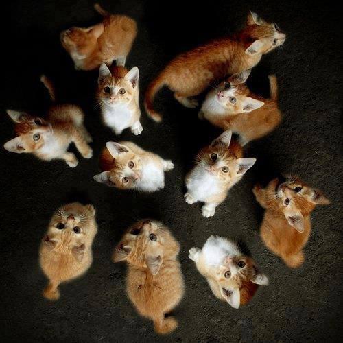 chat nombreux
