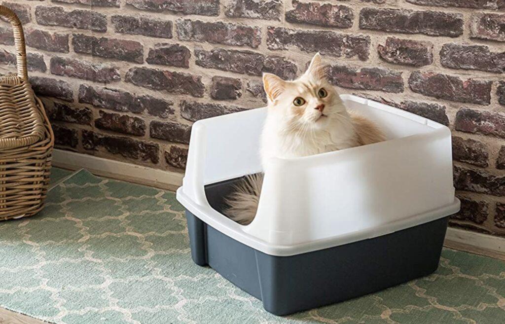 bac a litière pour chat à rebords hauts