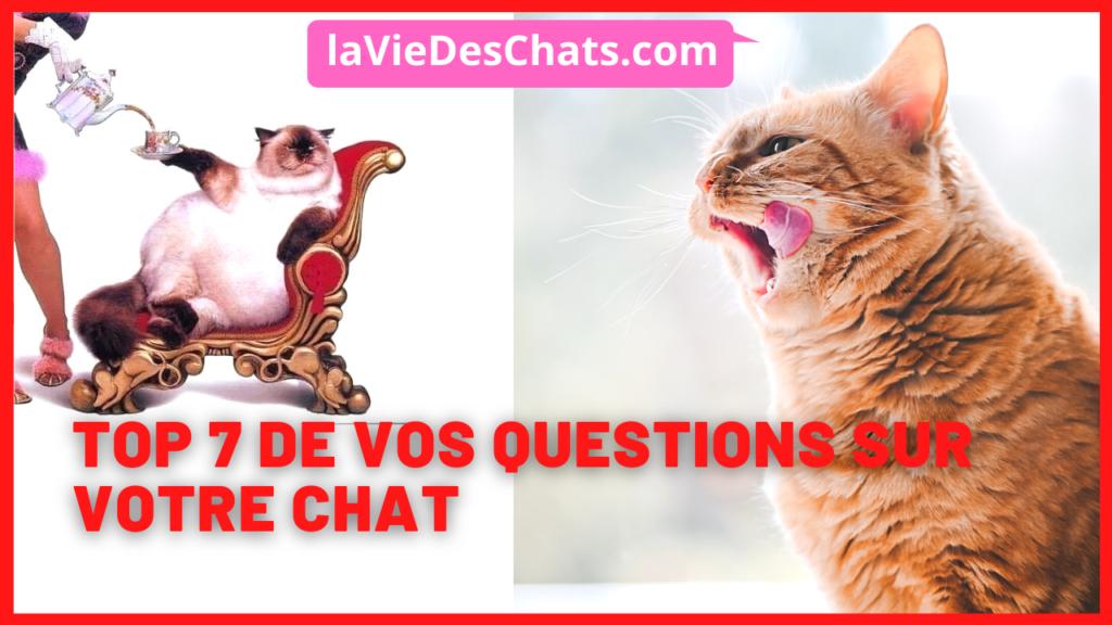 les 7 questions les plus posées à laVieDesChats