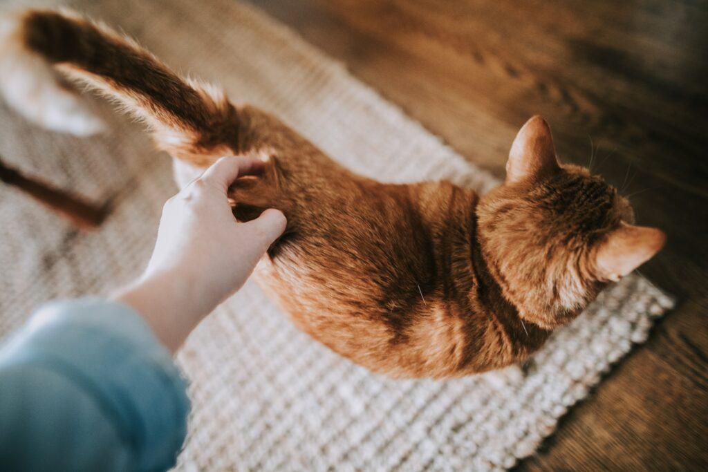 caresser le bas du dos de votre chat