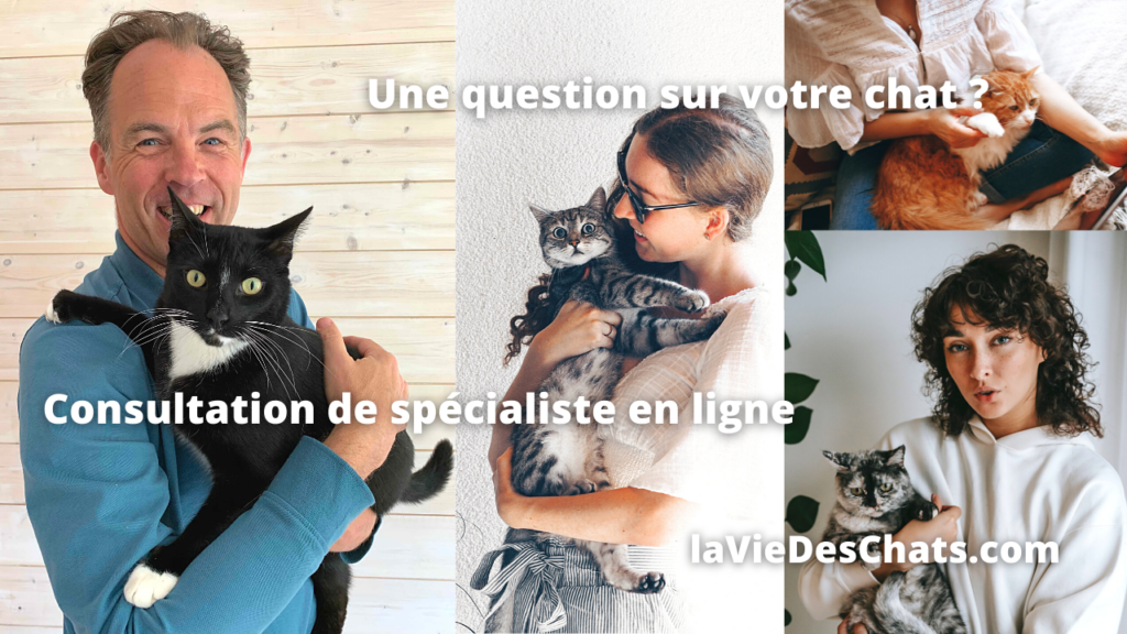 question sur votre chat